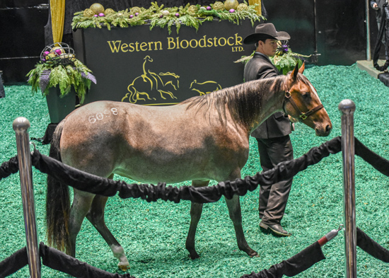 Preferred Breeders Sale Session III hits 90%