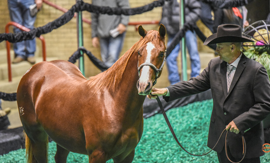 Preferred Breeders Sales Session II maintains strength