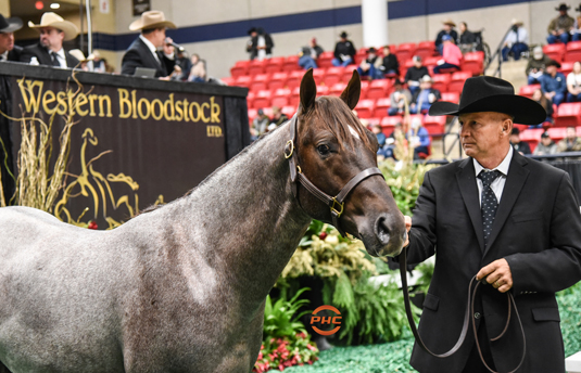 2020 NCHA Futurity Sales on track to break all past records