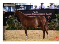 Fults Ranch Sale a landmark event